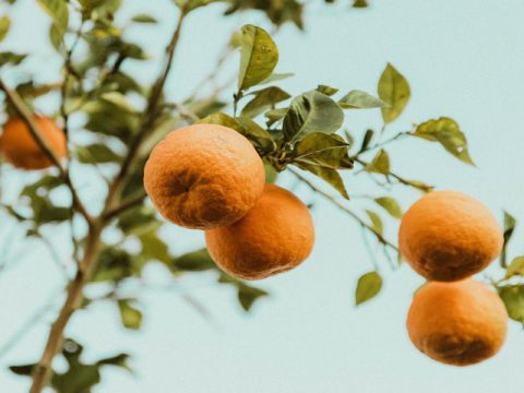Featured Image Top Citrus Industry Exhibitions 480x360 - Top Citrus Industry Exhibitions