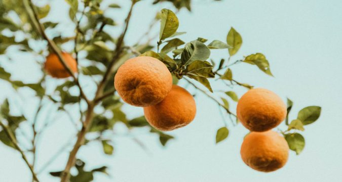 Featured Image Top Citrus Industry Exhibitions 675x360 - Top Citrus Industry Exhibitions