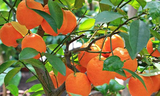Post Image Top Citrus Industry Exhibitions Conclusion - Top Citrus Industry Exhibitions