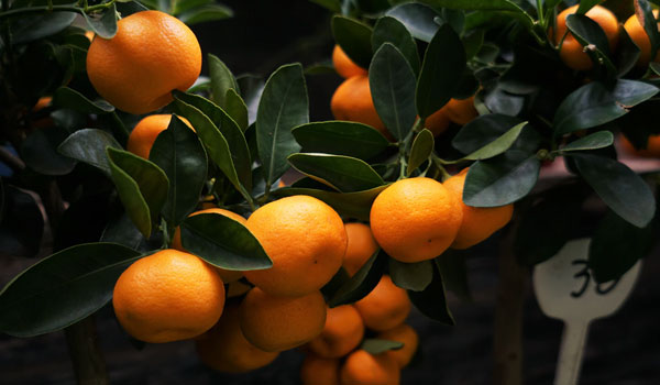 Post Image Top Reasons to Attend Citrus Exhibitions To Enjoy the Experience - Top Reasons to Attend Citrus Exhibitions