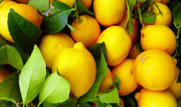 Post Image Why Citrus Fruits are Highly Recommended to Kids They Contain Essential Nutrients - Why Citrus Fruits are Highly Recommended to Kids